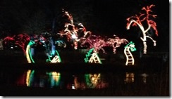 zoo lights dragon